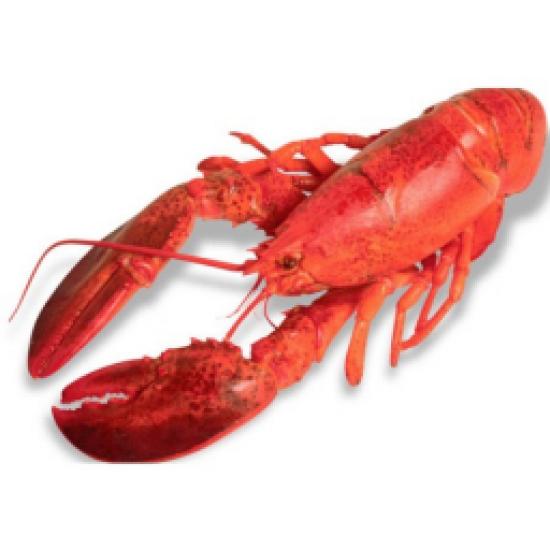 Щипка за морски дарове 62908 Lacor